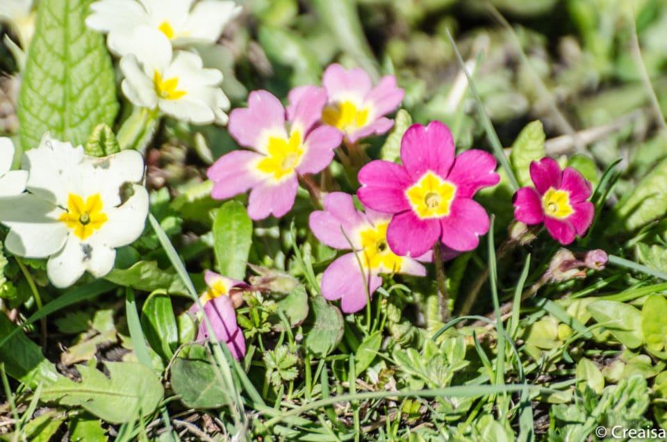 Le sacre du printemps…