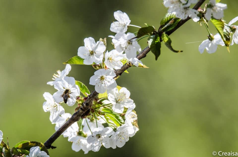 Le printemps à Champ-Pittet