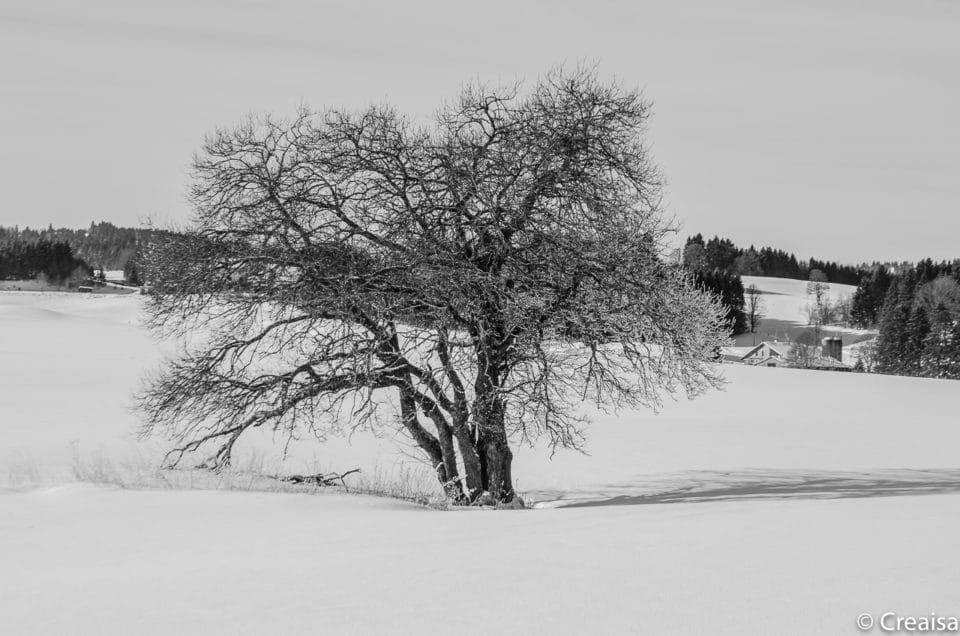 Neige, neige blanche…